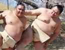 日本相扑拍妩媚写真
