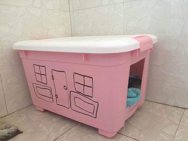 李昕泽小时候在家里宠物狗的箱子上画的车图案