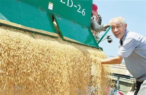 河北省廊坊市大城县韩村麦农用说相符收割机收割幼麦。进入21世纪后,当地农业死板化程度逐年挑高。(摄于2012年6月)