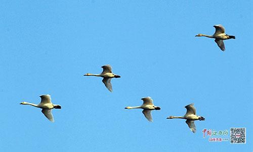 壁纸 动物 鸟 鸟类 500_302