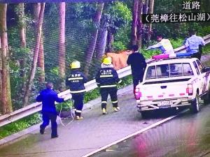 """广东惊现""""牛兄""""于高速路漫步 交警""""斗牛""""1小时"""