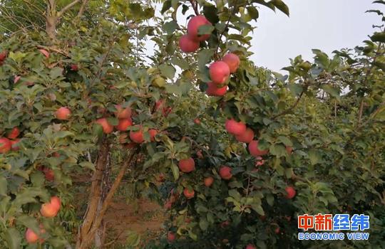 """餐饮业营改增,奥莉维亚.帕勒莫,疯狂的水果!苹果6月同比涨幅翻倍,却输给了鸭梨""""山大"""""""