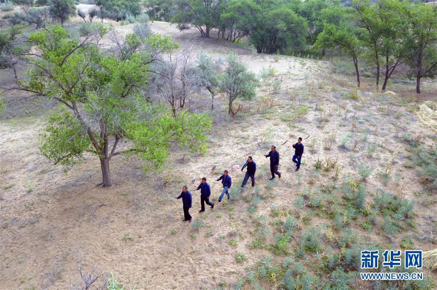 在武威市古浪县八步沙林场,场长郭万刚(左一)和大家一起前往治沙点(8月23日无人机拍摄)。新华社记者 范培珅