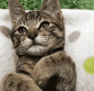 请停止养猫这一炫富行为!