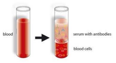 第二,新闻中反复强调了多次,是经过严格的血液生物安全性检测,病毒灭活,抗病毒活性检测等处理的。为什么要这么操作呢?因为血浆中的确是含有抗体成分,但是同时它还含有激素,血浆蛋白,脂蛋白和酶等多种产物,组份复杂。目前,我们对于血液组分的认知和功能其实还并没有完全研究透彻,因此进行严格的处理非常有必要。