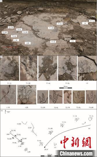 中科院团队在新疆准噶尔盆地发现世界最大的亚洲足迹