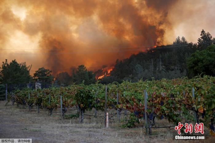 美加州山火延烧上万英亩!酒庄被吞没、逾5万人逃离