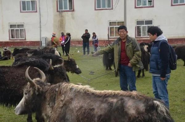 恒丰银行挂职干部赵潇与村民交流长毛牛养殖经验