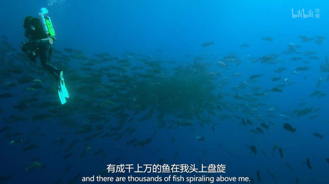 从纪录片《追踪海洋巨兽》,一窥B站的纪录片之旅