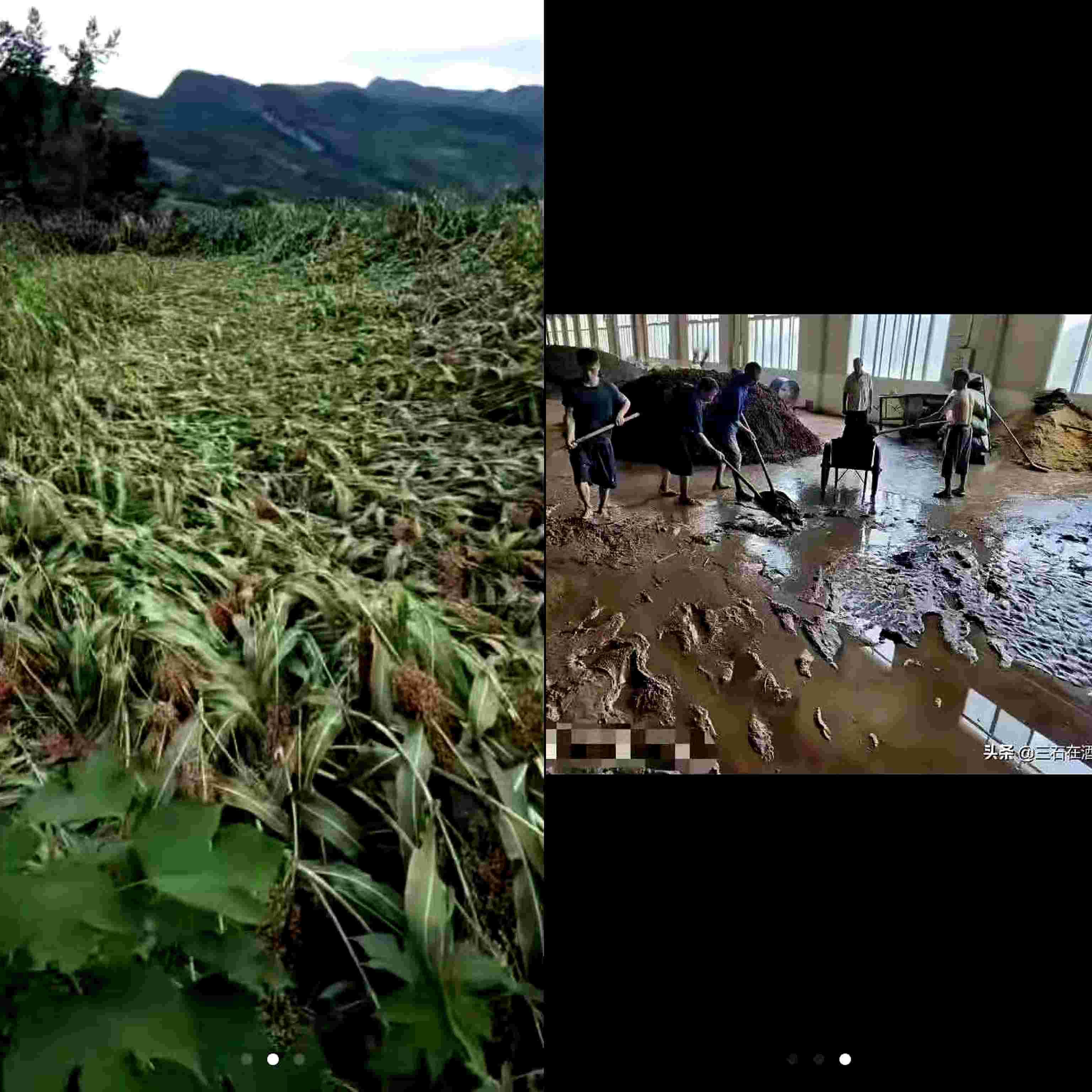 仁怀茅台降大暴雨 回应称白酒酒企生产正常、酒用高粱未受影响