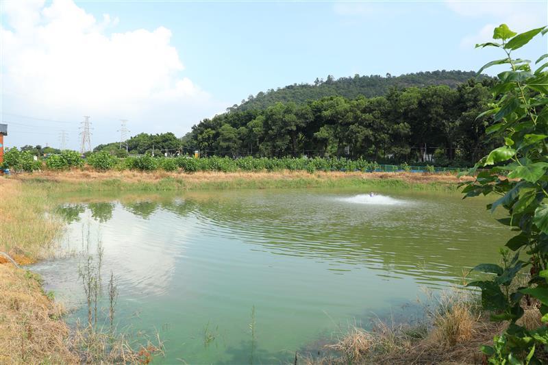 """珠三角百万亩池塘升级改造暨全省水产养殖业转型升级绿色发展现场会在佛山召开以""""小切口""""带动""""大变化""""  大力推进美丽渔场建设"""
