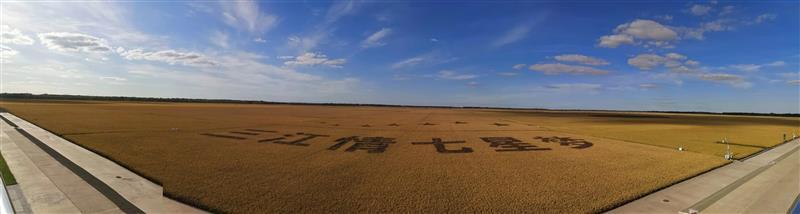 金秋,北大荒4400万亩良田拉开丰收画卷