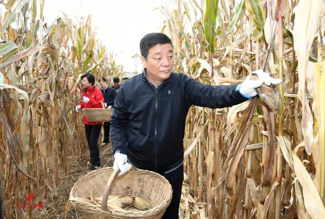 小伙租房两年房屋内成垃圾场 市委书记、市长到田间抢收玉米